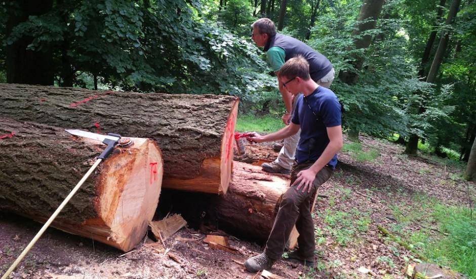 Einkauf Holz direkt im Wald