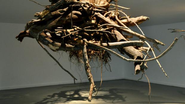 Tree Root - Baumwurzeln an der Decke