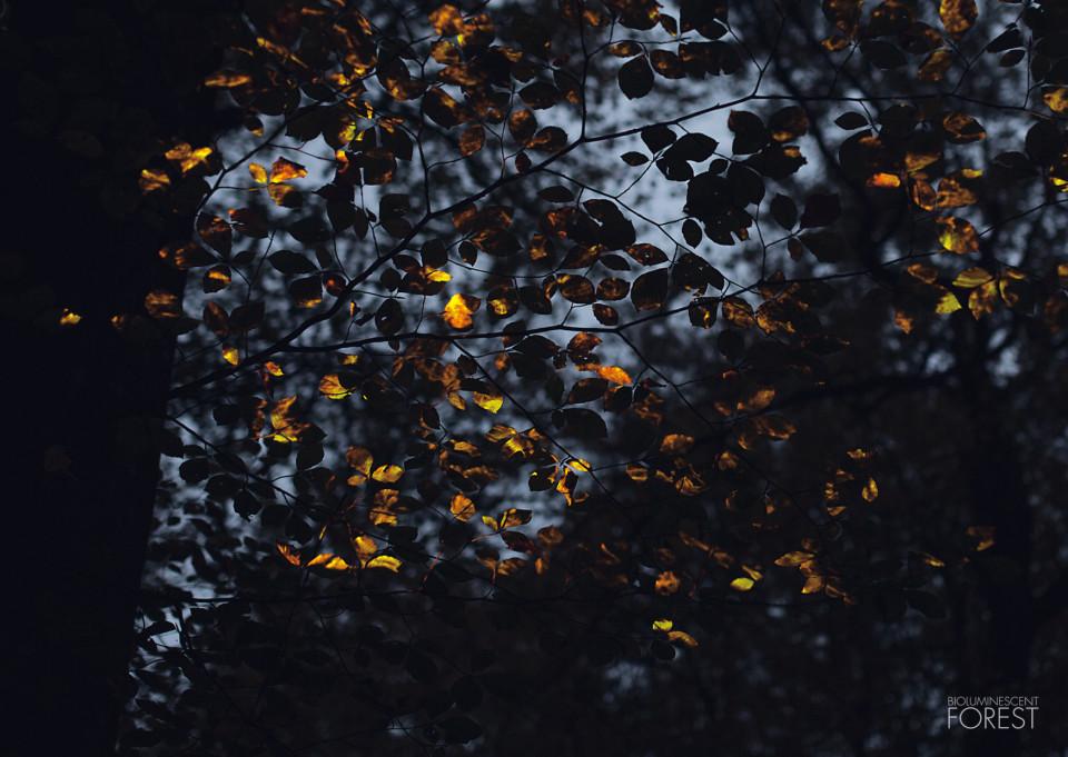 Burning_Leaves