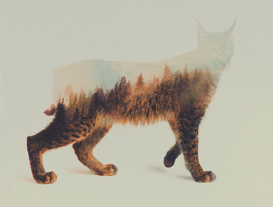 double-exposure-animal-photography-andreas-lie-12__880