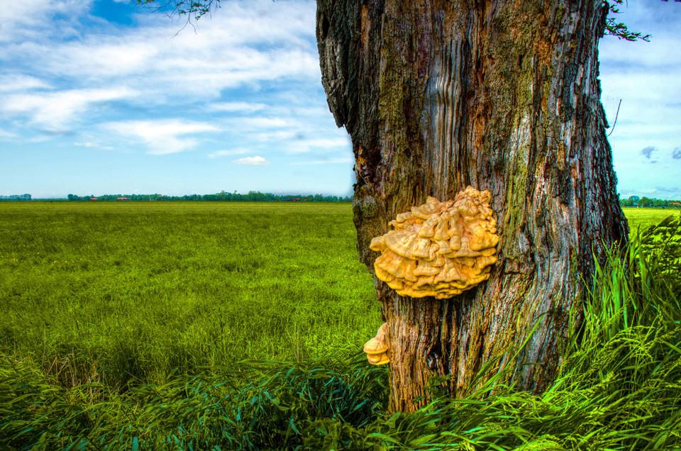 das-Leben-der-Bäume_Peter-Wohlleben_Pilz