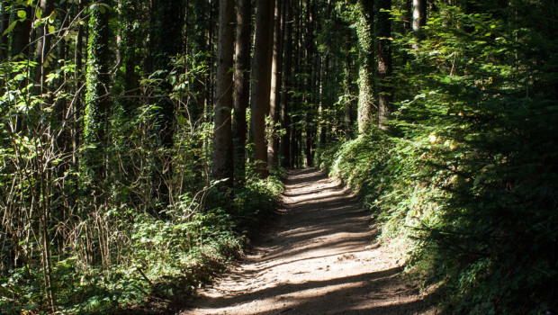 das-Leben-der-Bäume_Peter-Wohlleben_Waldweg
