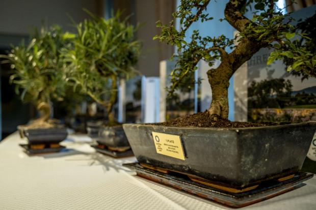 Man sieht einen Bonsai-Baum mit einer aufgeklebten Plakette auf der der Name eines Preisträgers steht